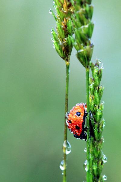 конкурс фото портреты живой природы